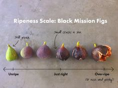 If you've made the same mistake of biting into a fig before it's fully ripe, take a look at our ripeness chart. You'll never make the same mistake again. Our Black Mission fig tree in the Sunset Te. Black Mission Fig, Antipasto, Fresh Figs, Fig Tree, Fruits And Vegetables, Chutney, Food Hacks, Cooking Tips, Vegetable Gardening