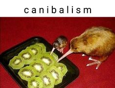 THEY SPELLED CANNIBALISM WRONG THOUGH
