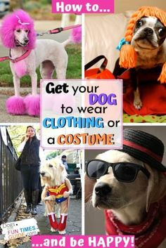 Getting dogs to wear dog clothing and Halloween costumes can be tricky. These are the best tips for getting your dog dressed up without making him uncomfortable. Plus what to do if your dog doesn't like wearing clothing or costumes at all! And... if you're going to dress up your dog for Halloween, I've got some great tips to ensure that your dog remains happy (and safe) throughout the day... or the entire event. #doghalloween #dogcostume #dogclothes