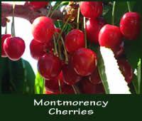 Utah State Fruit - The Cherry