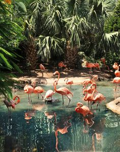Flamingo in tropical beach lagoon. Beautiful Birds, Beautiful World, Animals Beautiful, Beautiful Places, Animals And Pets, Cute Animals, Tier Fotos, Tropical Vibes, Tropical Paradise