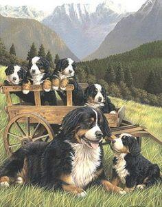 Historie a využití vozíků | Vozíky pro psy