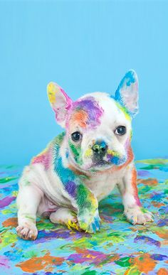 Dog Wallpapers are added. Beautiful and cute dogs / Cute Little Animals, Cute Funny Animals, Funny Dogs, Dog Pitbull, Animal Pictures, Cute Pictures, Rainbow Dog, Rainbow Pastel, Rainbow Colors
