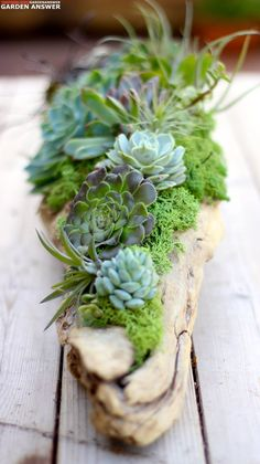 Succulents air plants moss and driftwood Love it gardenanswer gardenanswer Succulents In Containers, Cacti And Succulents, Planting Succulents, Planting Flowers, Air Plants, Garden Plants, Indoor Plants, House Plants, Indoor Outdoor