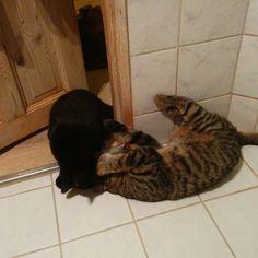 Brothers #cats #catsofinstagram