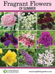 Learn how to design a fragrant garden.