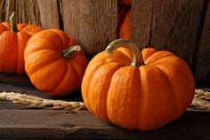 Plump little pumpkins.