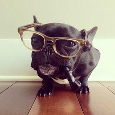 The world's most stylish dog....