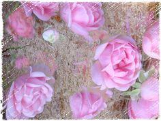 Strukturfoto: Rosen im Holztextur