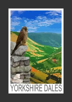 Kestrels in the Yorkshire Dales (Art Print)