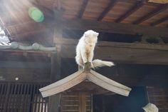 猫又-03.jpg