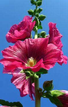 Big Pink Flower 13x20 In. Print $20.00