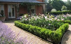 Modern Country garden: a blend of romantic roses with neat rows of catmint, combined with formal topiary. These low buxus' (box) are newly planted but will end up as neatly clipped parterre hedges. Modern Country Style: Rookery House: Stunning Modern Country Garden Click through for details.