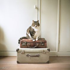 {you are not going anywhere} Kedi the cat :)