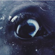 Фото лошадей Horses, Horse