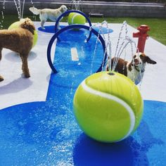Business Go From Dog-Friendly to BRING ON THE DOGS! If want to encourage dog owners to come to your hotel, doggie daycare, apartments, etc. then try by adding an awesome Fido Splash Pad! Dog Boarding Kennels, Pet Boarding, Dog Kennels, Splash Pad, Indoor Dog Park, Dog Playground, Playground Ideas, Dog Yard, Pet Hotel