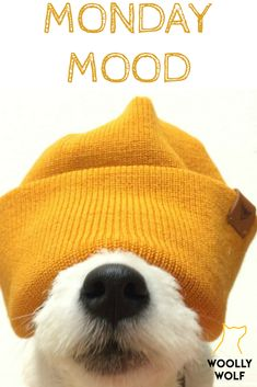 Doggy in a beanie, doggo covered in a beanie. Jack russel terrier puppy in a hat. Funny Dog Captions, Funny Dog Memes, Funny Dogs, Baby Puppies, Cute Puppies, Dogs And Puppies, Maltese Puppies, Jack Russell Dogs, Jack Russell Terrier