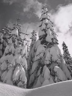 ANSEL ADAMS  1902 - 1984 Snow-Covered Trees near Badger Pass, Yosemite National Park Date:	1962