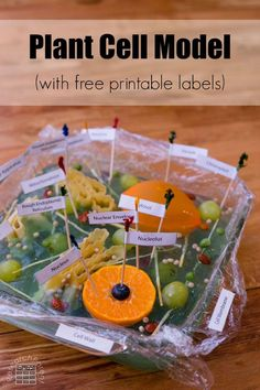 Fun demonstration of cell biology using food to make an animal cell model for kids. An easy, memorable activity to get kids excited about science. Human Body Activities, Science Activities For Kids, Stem Activities, Kindergarten Activities, Teaching Science, Learning Activities, Teaching Ideas, Cell Model Project, Animal Cell Project