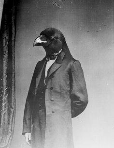 Bird head Lincoln @Amanda Fennell