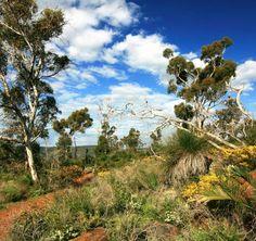 Trails in the Swan Valley Aboriginal Art, Western Australia, Wedding Locations, Zig Zag, Perth, Google Images, Swan, Trail, Wildlife