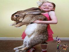 Blog do Herói: O maior coelho do mundo