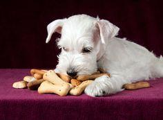 galletas-de-pollo-para-nuestro-perro