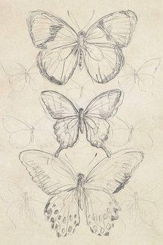 art sketchbook Vintage Butterfly Sketch I Canvas Artwork by June Erica Vess Art Sketches Art art sketches artwork Butterfly Canvas Erica June sketch sketchbook Vess Vintage Art Drawings Sketches Simple, Pencil Art Drawings, Cool Sketches, Pretty Drawings, Tattoo Drawings, Fairy Drawings, Animal Sketches Easy, Tattoo Sketches, Sketch Drawing