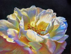 Veronica Winters - Yellow Rose (Colored Pencil)