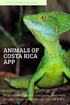 Animals of Costa Rica App for Android & iOS – Animal Kingdom Amphibians, Reptiles, Mammals, Marine Fish, Field Guide, Image Shows, Animal Kingdom, Costa Rica, Fresh Water