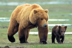 Animal Dads | fathers-day-2013-pictures-of-animal-dads-bears.jpg