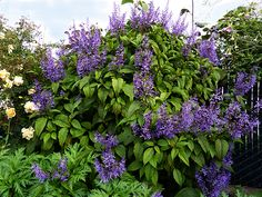 Specializing in rare and unusual annual and perennial plants, including cottage garden heirlooms and hard to find California native wildflowers. Colorful Flowers, Purple Flowers, Wild Flowers, Home Garden Plants, Shade Garden, Backyard Plants, Hello Hello Plants, Pick Your Own Fruit, Farm Gardens