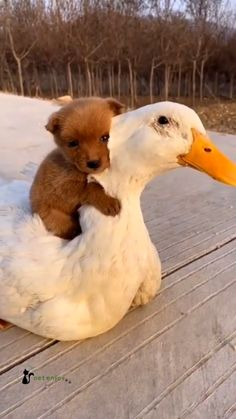 Baby Animals Super Cute, Cute Wild Animals, Baby Animals Pictures, Cute Baby Dogs, Cute Funny Dogs, Cute Animal Photos, Cute Animal Videos, Cute Little Animals, Funny Animal Pictures