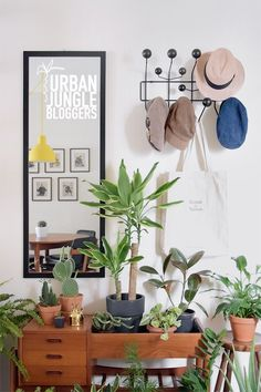 MID MOD & MORE FOR URBAN JUNGLE BLOGGERS: PLANT GANG, INDOORS