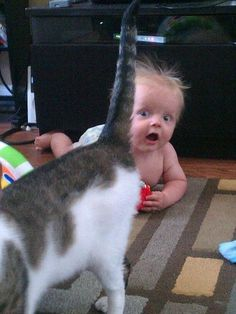 photobombing cat omg the look on that baby's face is priceless!!!