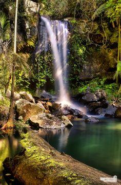 Curtis Falls, Mt Tamborine, my back yard. Tasmania, Rainforest Locations, Mt Tamborine, Land Of Oz, Rock Pools, Photo Location, Australia Travel, Gold Coast, Dream Vacations