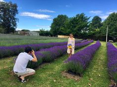 We have a whole field of blooming lavender at moment. 📷🎞  www.lavenderbackyard.co.nz  #blooming #lavender #lavenderfarm #lavenderbackyardgarden #newzealand #NzMustDo #pyo