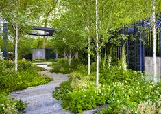 Chelsea 2010 - The Cancer Research UK Garden | Designer - Ro… | Flickr