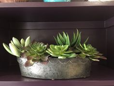 Realistic faux succulent available to purchase in Sarah Styles Florist shop in Hungerford Faux Succulents, Faux Flowers, Planter Pots, Seasons, Shop, Style, Fake Flowers, Swag, Seasons Of The Year