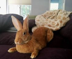 When you provide a happy, safe environment for your rabbit in your home, you'll fully enjoy his personality.