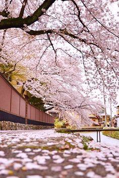 春の疏水,Kyoto