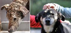 Эта несчастная окаменевшая собака никогда не думала, что ее кто-то полюбит - http://pixel.in.ua/archives/13753