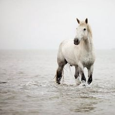 White horse playing in the ocean shore