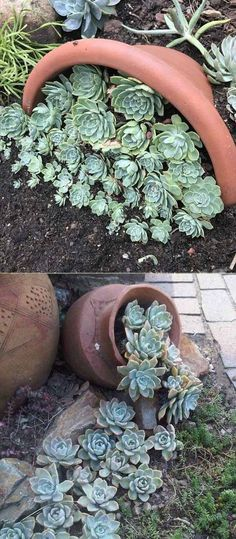 20 Ideas for Creating Amazing Garden Succulent Landscapes - Diy Garden Projects Garden Types, Diy Garden, Garden Care, Garden Projects, Garden Plants, Rockery Garden, Herb Garden, Succulent Landscaping, Planting Succulents