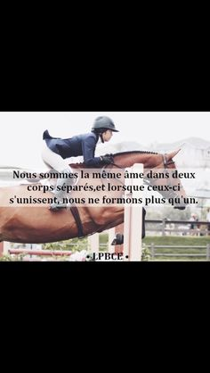 Horse quote Citation cheval - Art Of Equitation