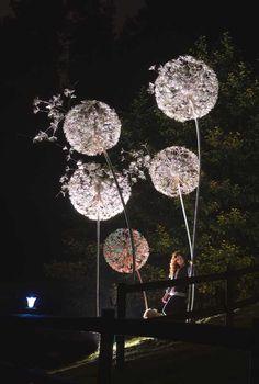 Giant Dandelions. Night