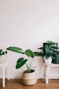 Hygge: 6 ideias, livros ou tendências para inspirar sua semana na quarentena | primeiro as damas! Hygge, Life Hacks Diy, Flower Garden Layouts, Diy Interior, Interior Design, Plantas Indoor, Garden Design, House Design, Landscape Design
