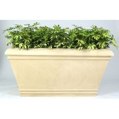 Allied Molded Products Cezar Rectangular Planter Box Color: Beige
