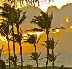 To watch the sun set through palm trees on the shores of Maui.