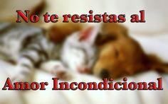 #EnViVo La Resistencia al Amor Incondicional